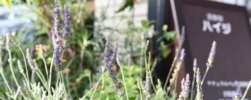 江東区門前仲町の美容室ハイジの花壇